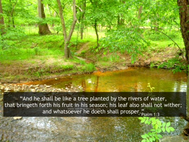 he shall be like a tree planted by the rivers of waters