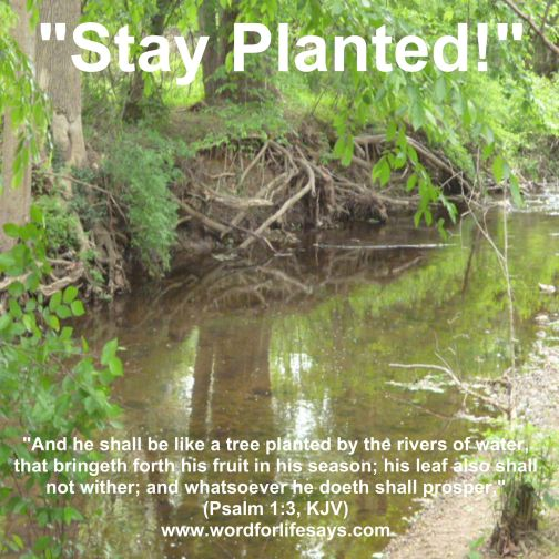 stay planted-001