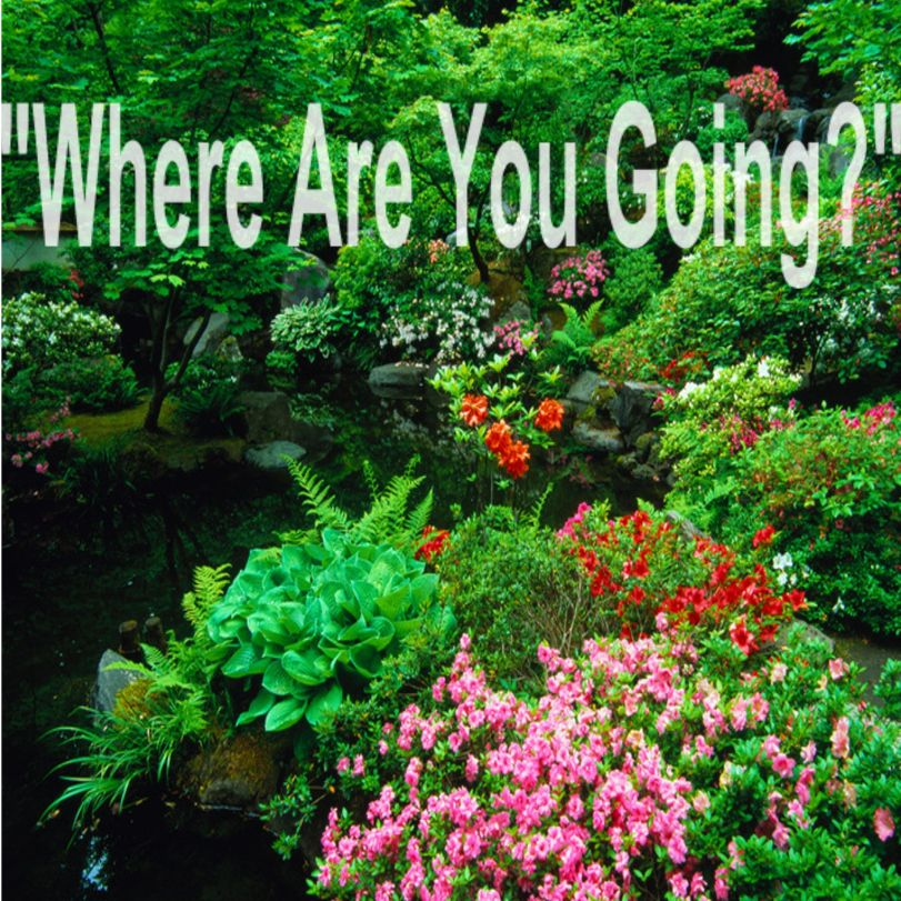 where are u going-001
