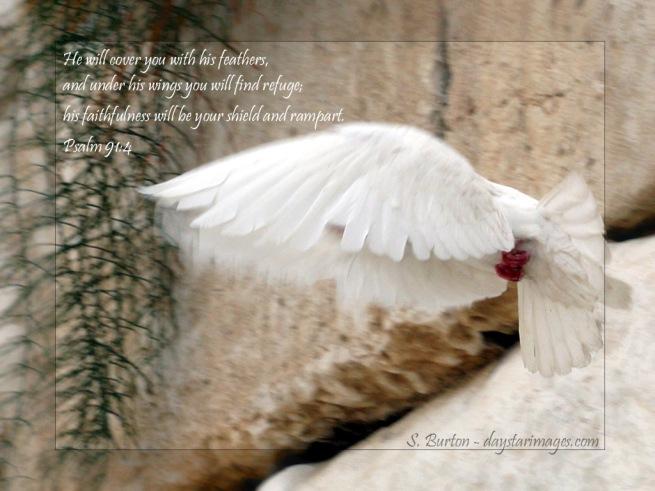 psalm-914_2897_1024x768