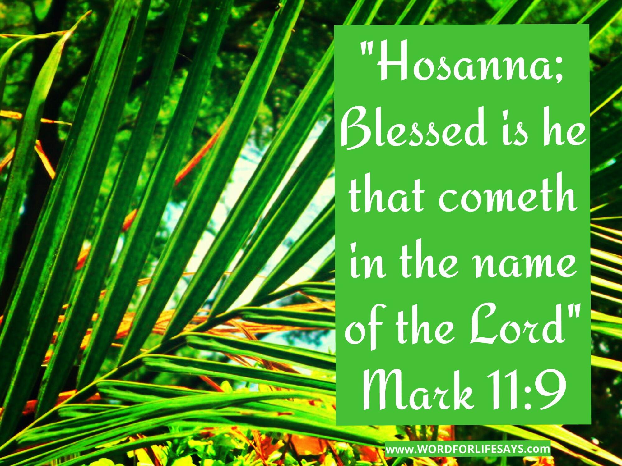 hosanna! happy palm sunday! | word for life says . . .