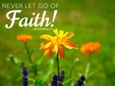never-let-go-of-faith-marigold-pixabay-free-picture